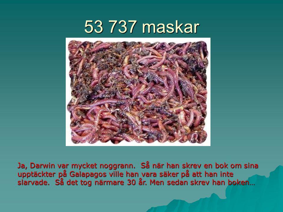 53 737 maskar