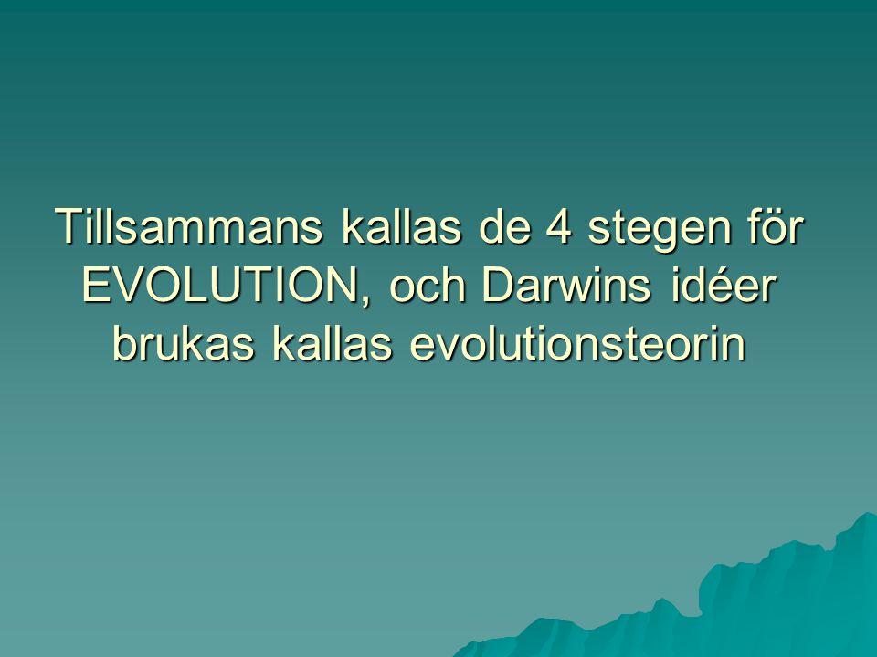 Tillsammans kallas de 4 stegen för EVOLUTION, och Darwins idéer brukas kallas evolutionsteorin