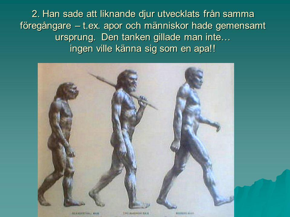 2. Han sade att liknande djur utvecklats från samma föregångare – t.ex.