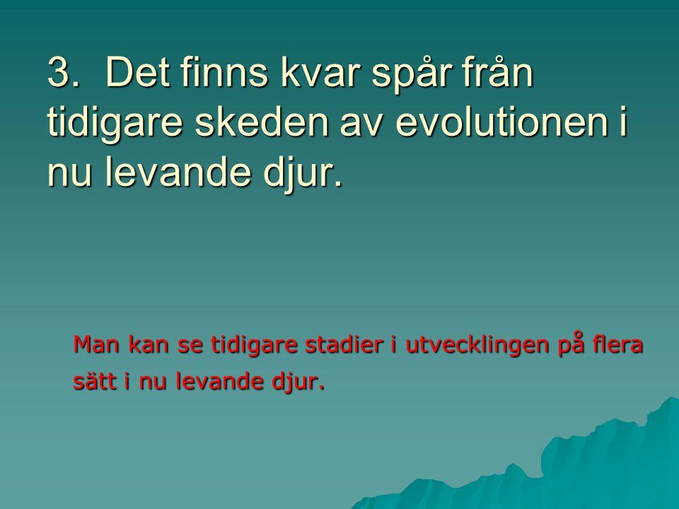 3. Det finns kvar spår från tidigare skeden av evolutionen i nu levande djur.