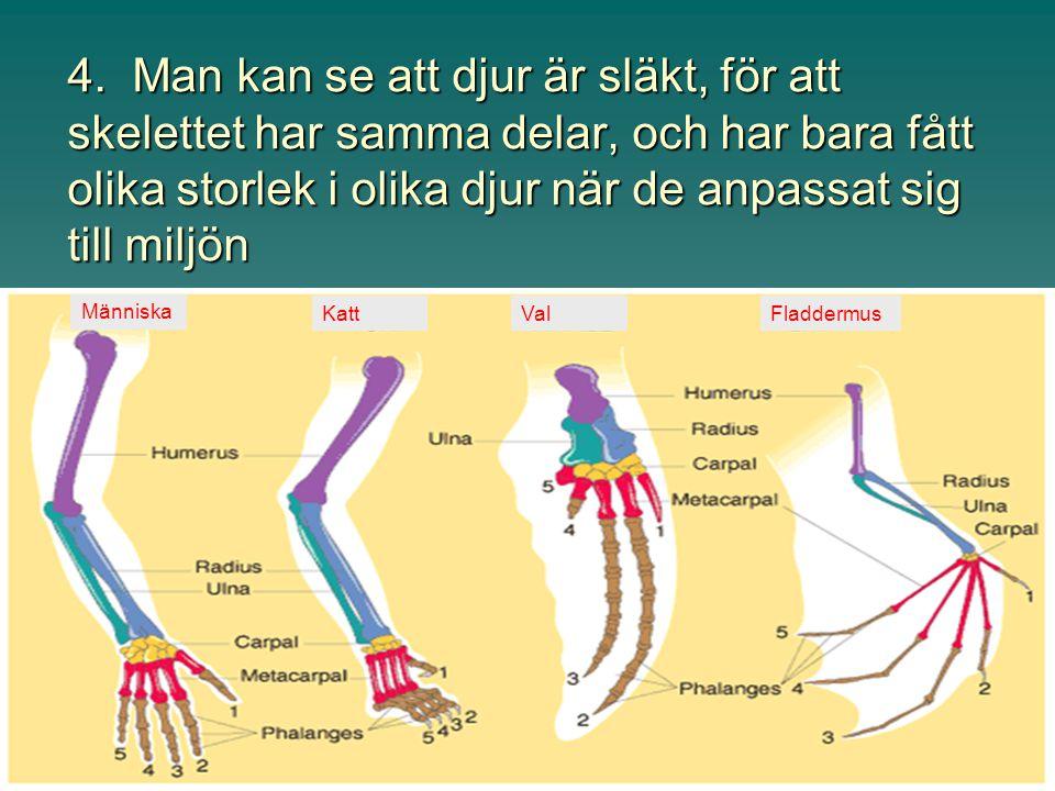 4. Man kan se att djur är släkt, för att skelettet har samma delar, och har bara fått olika storlek i olika djur när de anpassat sig till miljön