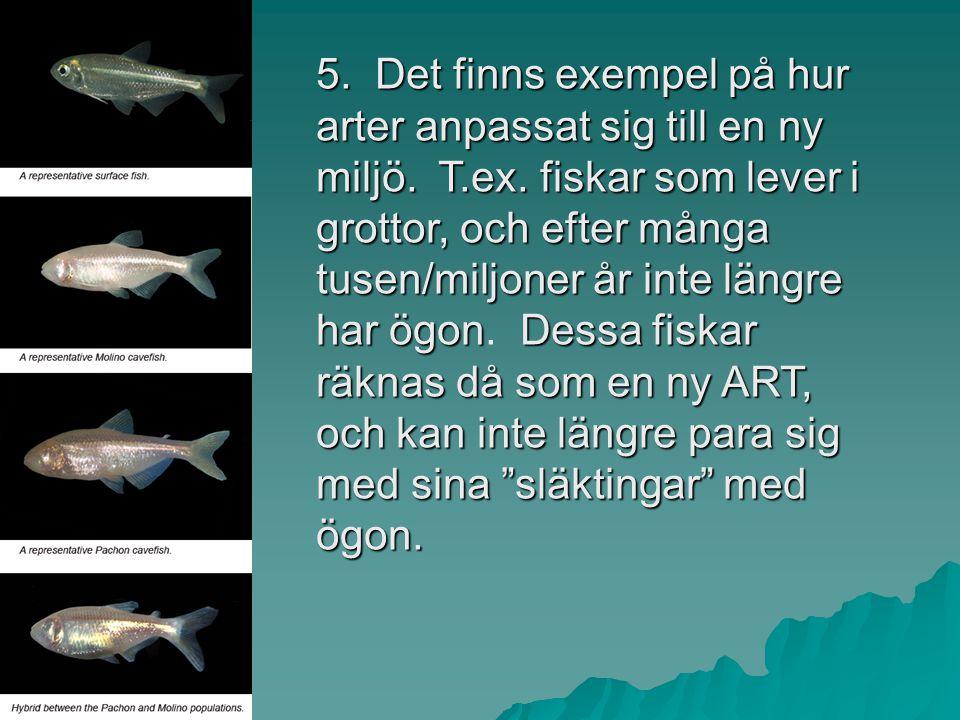 5. Det finns exempel på hur arter anpassat sig till en ny miljö. T. ex