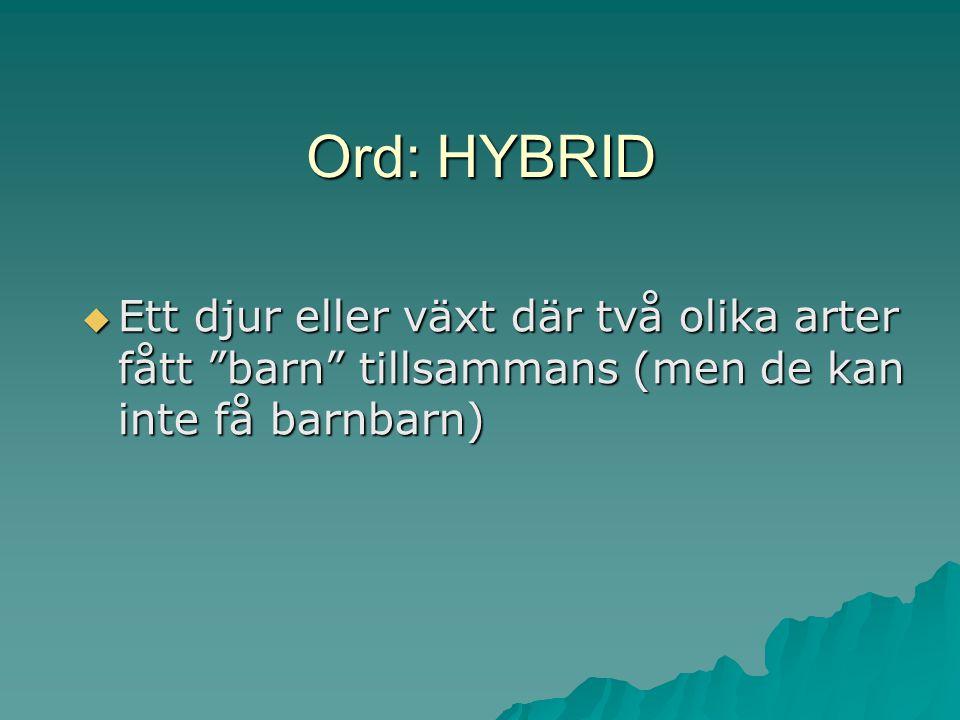 Ord: HYBRID Ett djur eller växt där två olika arter fått barn tillsammans (men de kan inte få barnbarn)