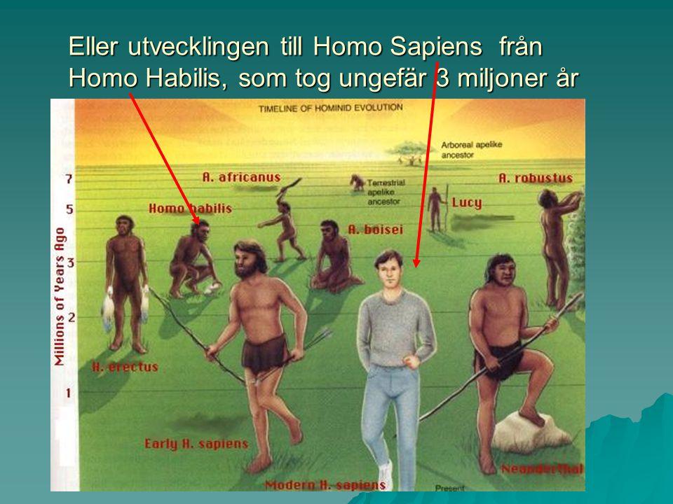 Eller utvecklingen till Homo Sapiens från Homo Habilis, som tog ungefär 3 miljoner år