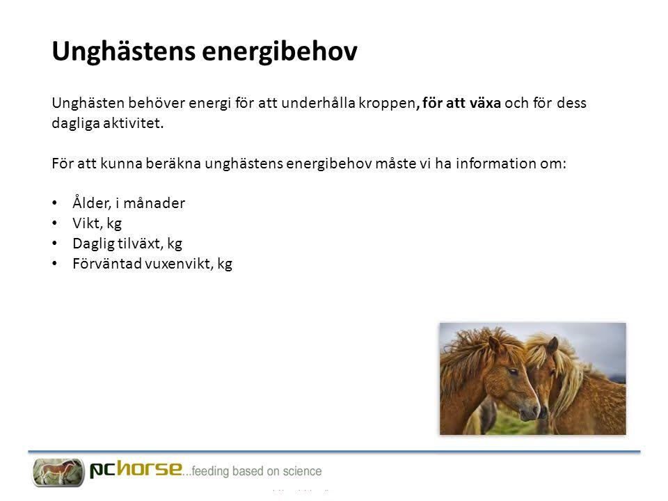 Unghästens energibehov