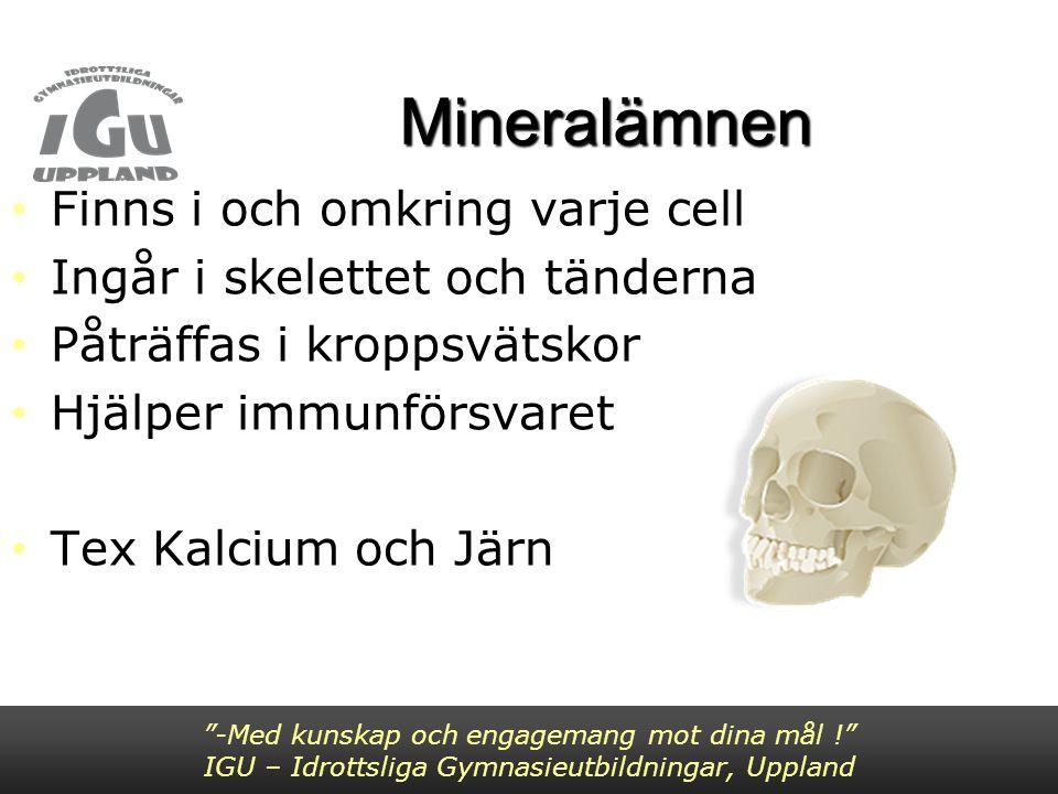 Mineralämnen Finns i och omkring varje cell