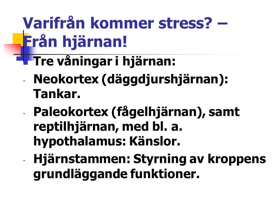 Varifrån kommer stress – Från hjärnan!