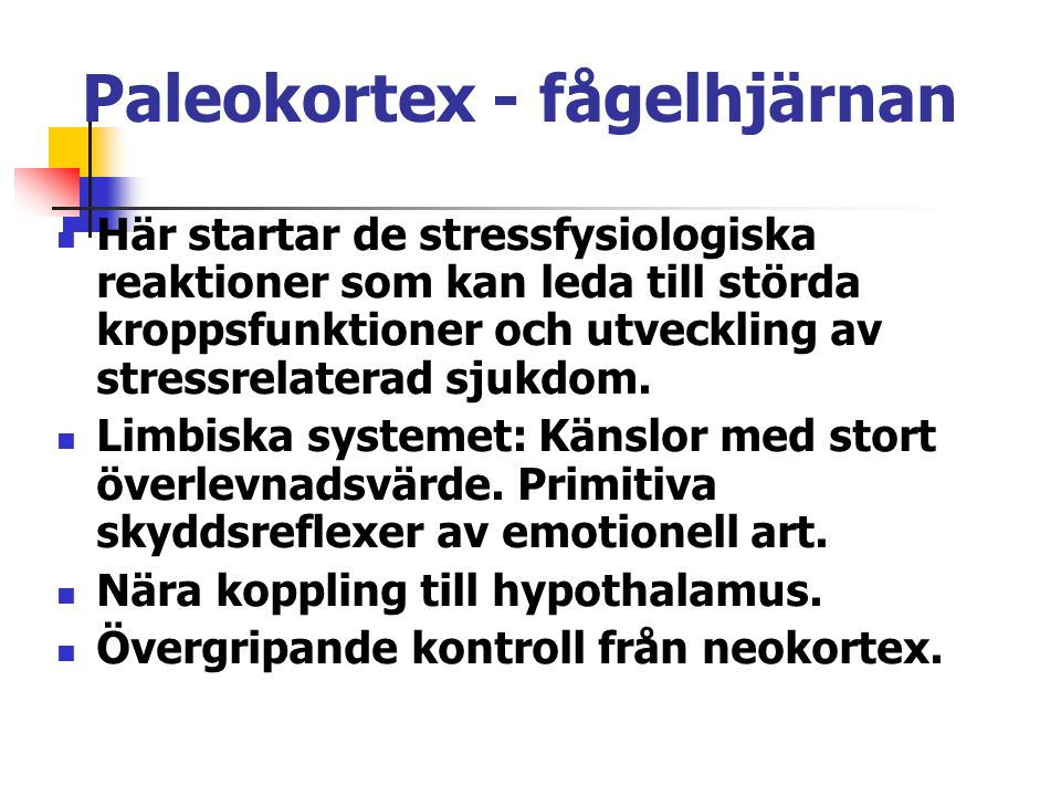 Paleokortex - fågelhjärnan