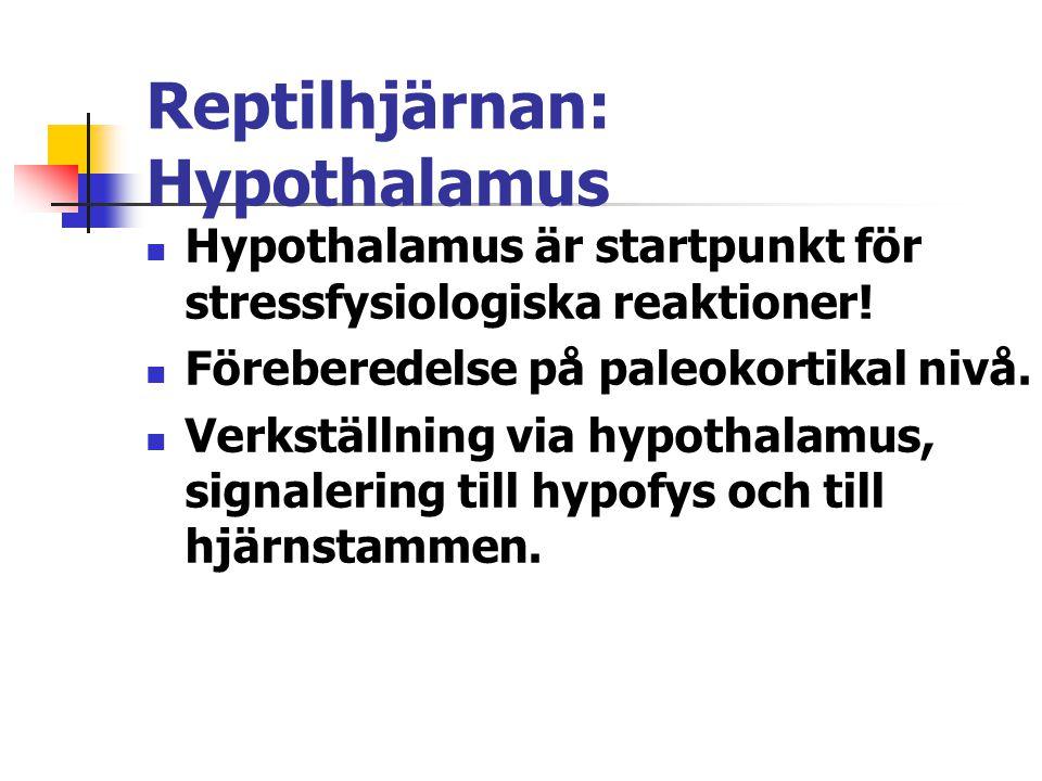 Reptilhjärnan: Hypothalamus