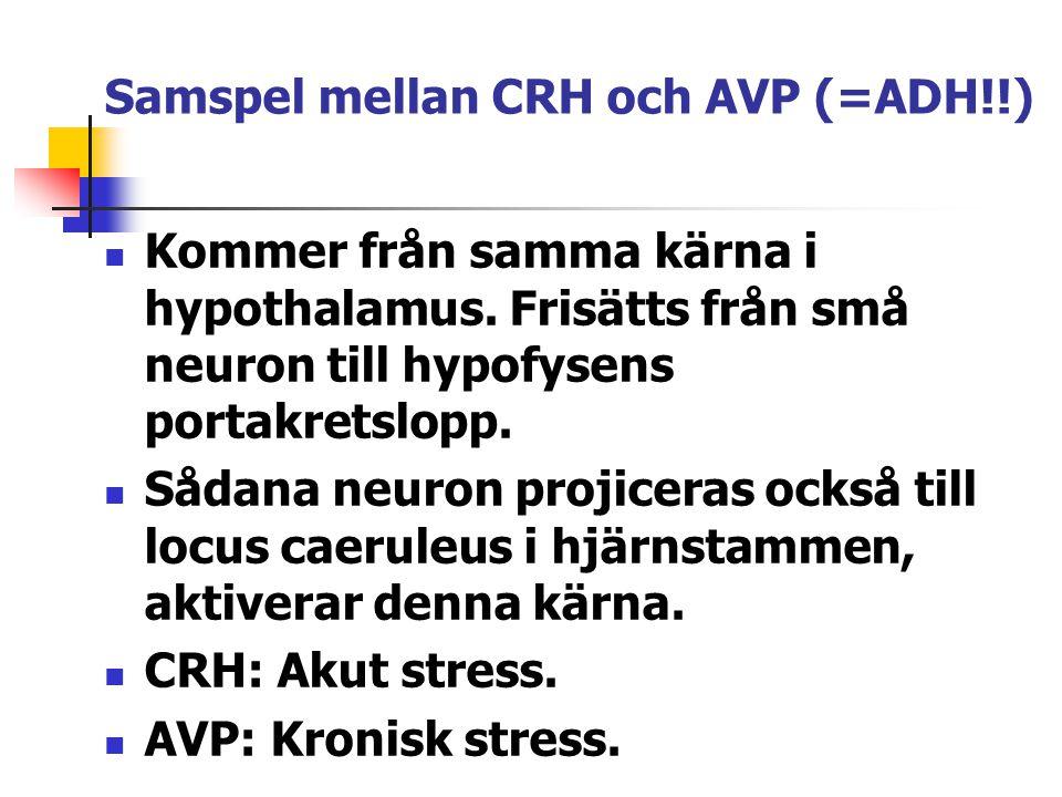 Samspel mellan CRH och AVP (=ADH!!)