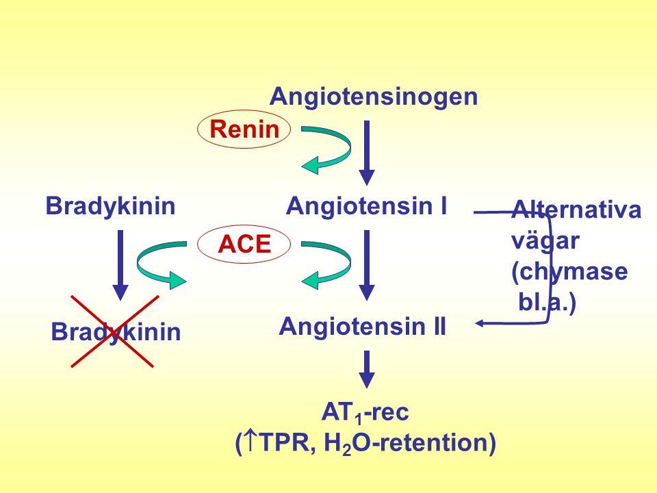 Angiotensinogen Renin. Angiotensin I. ACE. Angiotensin II. Alternativa. vägar. (chymase. bl.a.)