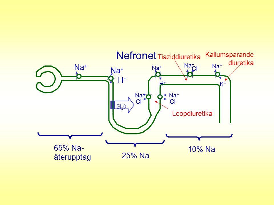 Nefronet Na+ H+ 65% Na- 10% Na återupptag 25% Na Kaliumsparande