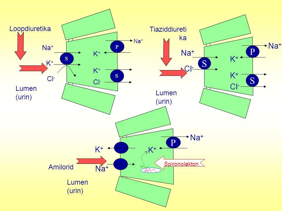 P S P Na+ K+ Cl- K+ Na+ Loopdiuretika Tiaziddiuretika Na+ K+ Cl-