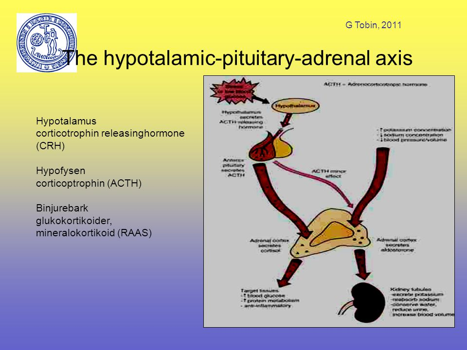 The hypotalamic-pituitary-adrenal axis