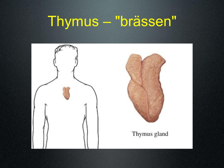 Thymus – brässen
