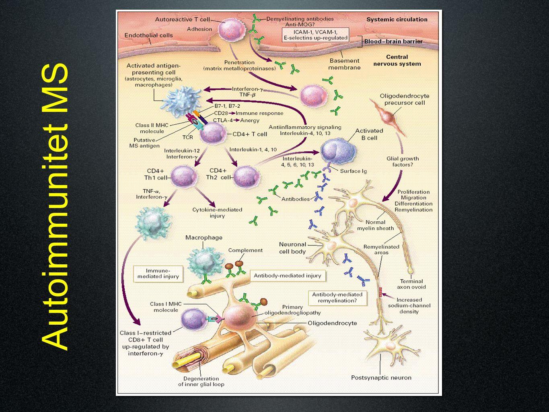 Autoimmunitet MS