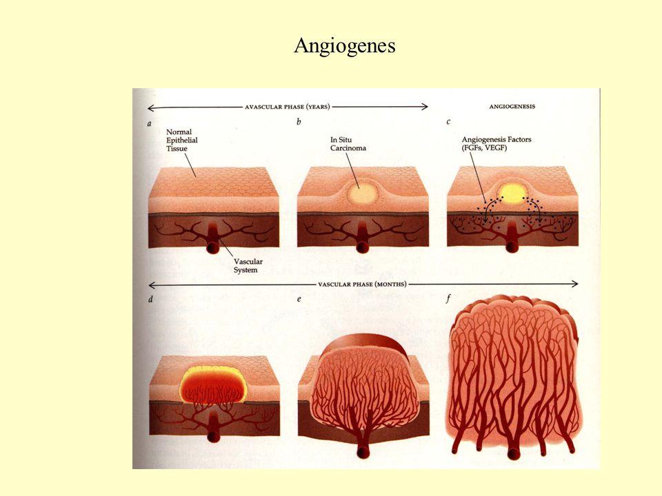 Angiogenes