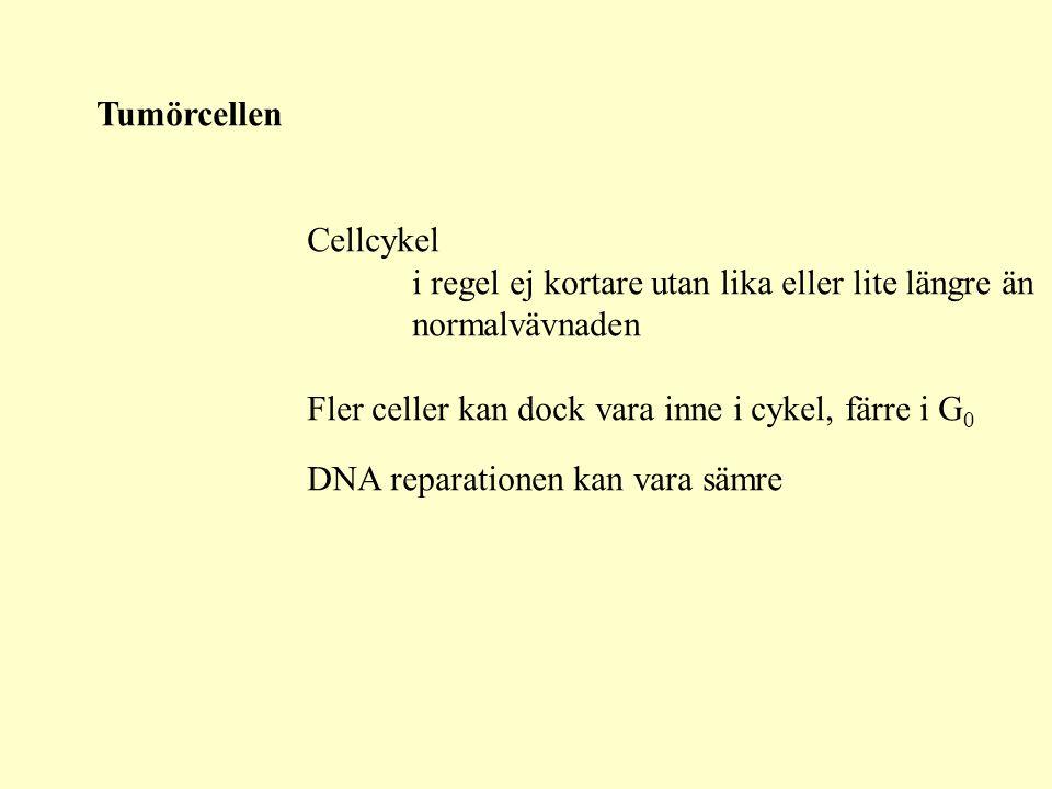 Tumörcellen Cellcykel. i regel ej kortare utan lika eller lite längre än. normalvävnaden. Fler celler kan dock vara inne i cykel, färre i G0.