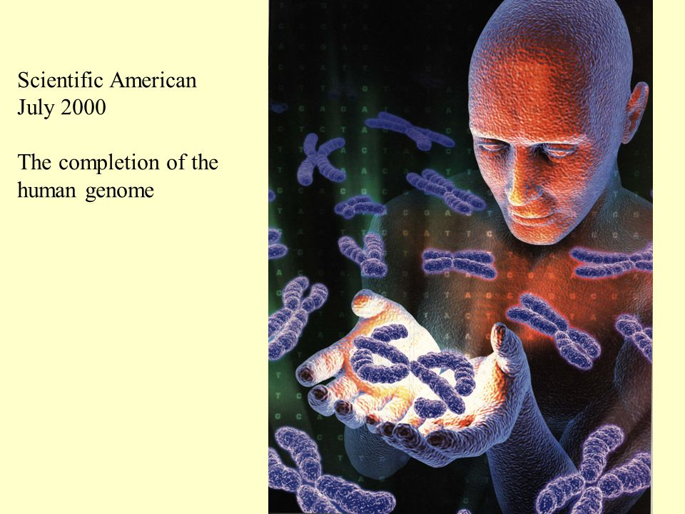 Scientific American July 2000 The completion of the human genome