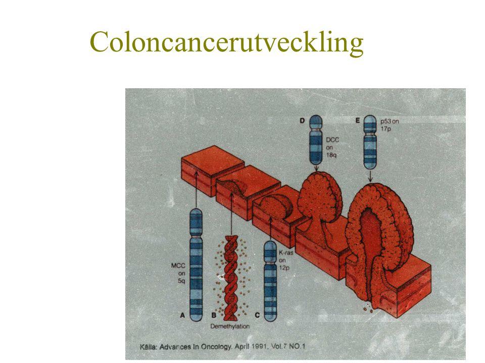 Coloncancerutveckling