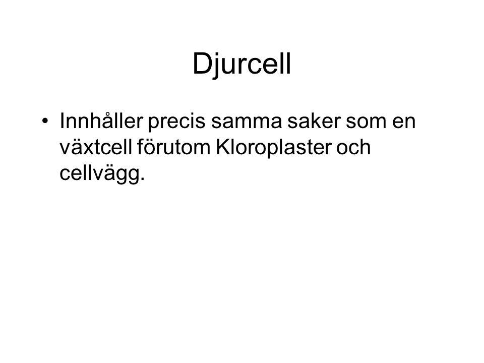 Djurcell Innhåller precis samma saker som en växtcell förutom Kloroplaster och cellvägg.