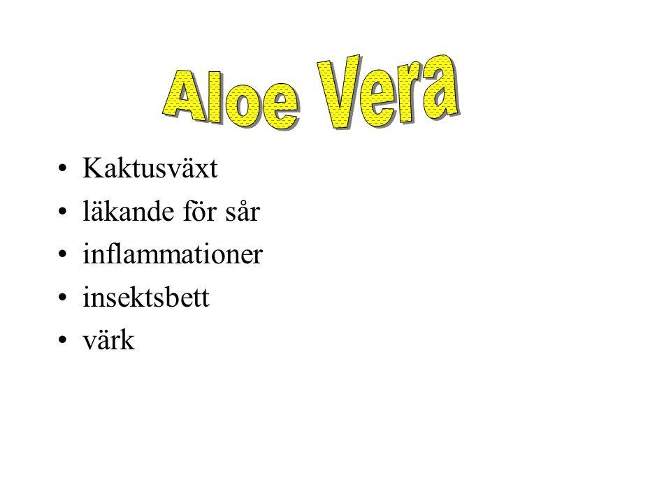 Aloe Vera Kaktusväxt läkande för sår inflammationer insektsbett värk