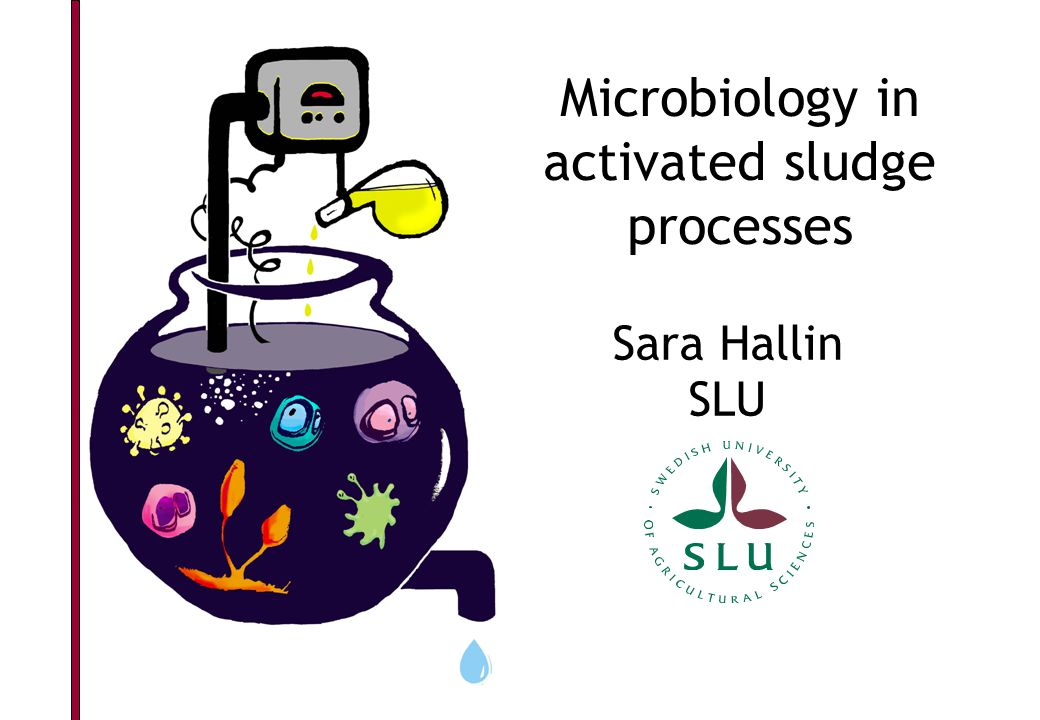 Microbiology in activated sludge