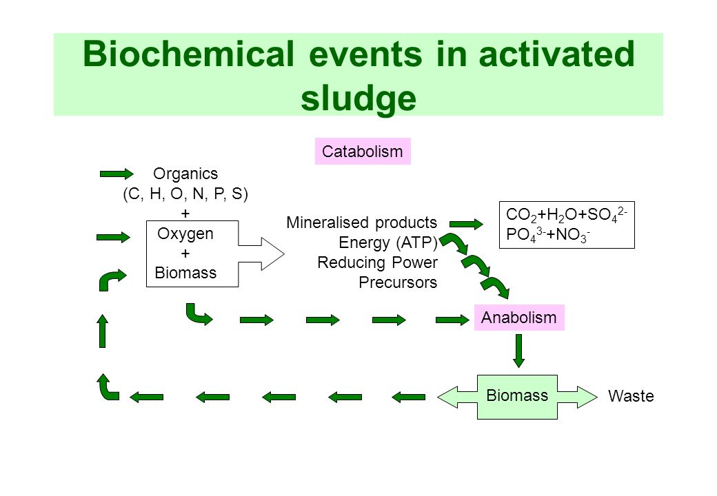 Biochemical events in activated sludge