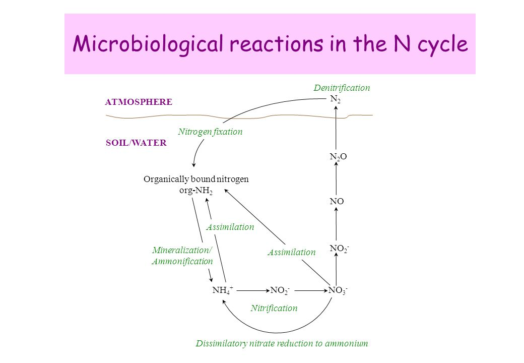 Microbiological reactions in the N cycle