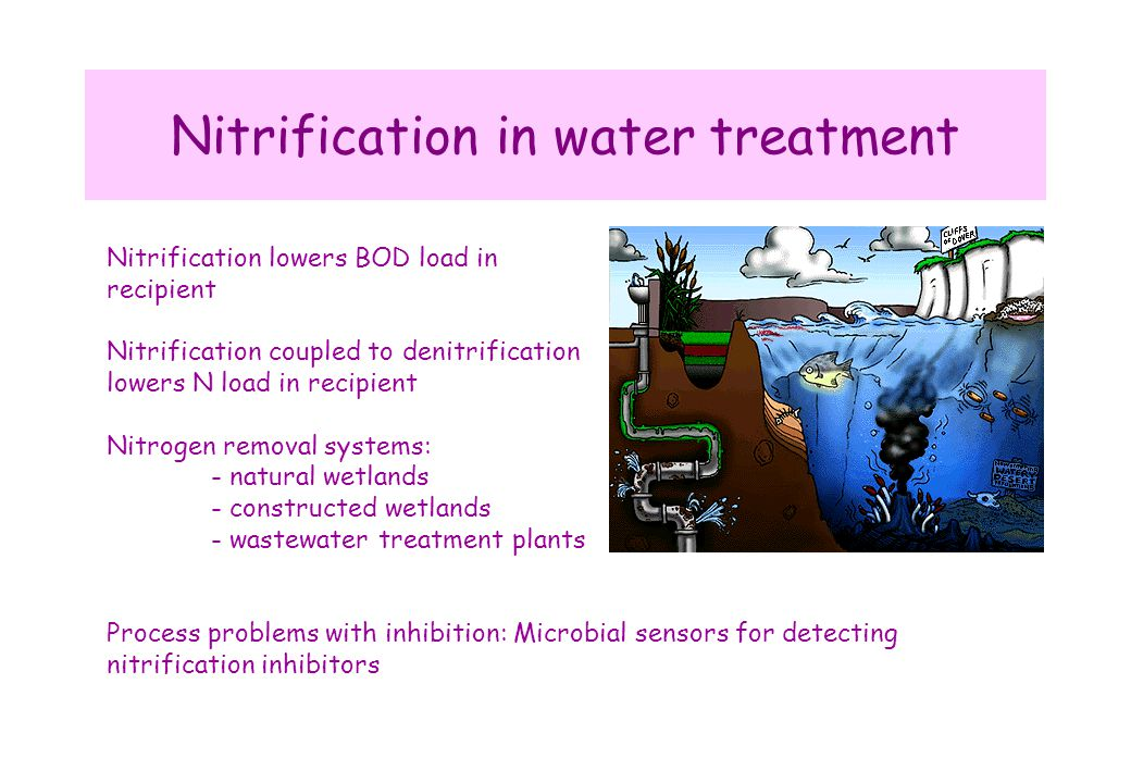 Nitrification in water treatment