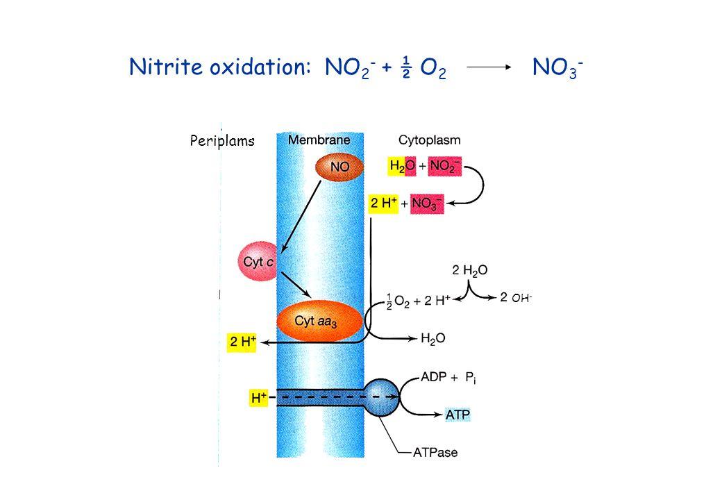 Nitrite oxidation: NO2- + ½ O2 NO3-