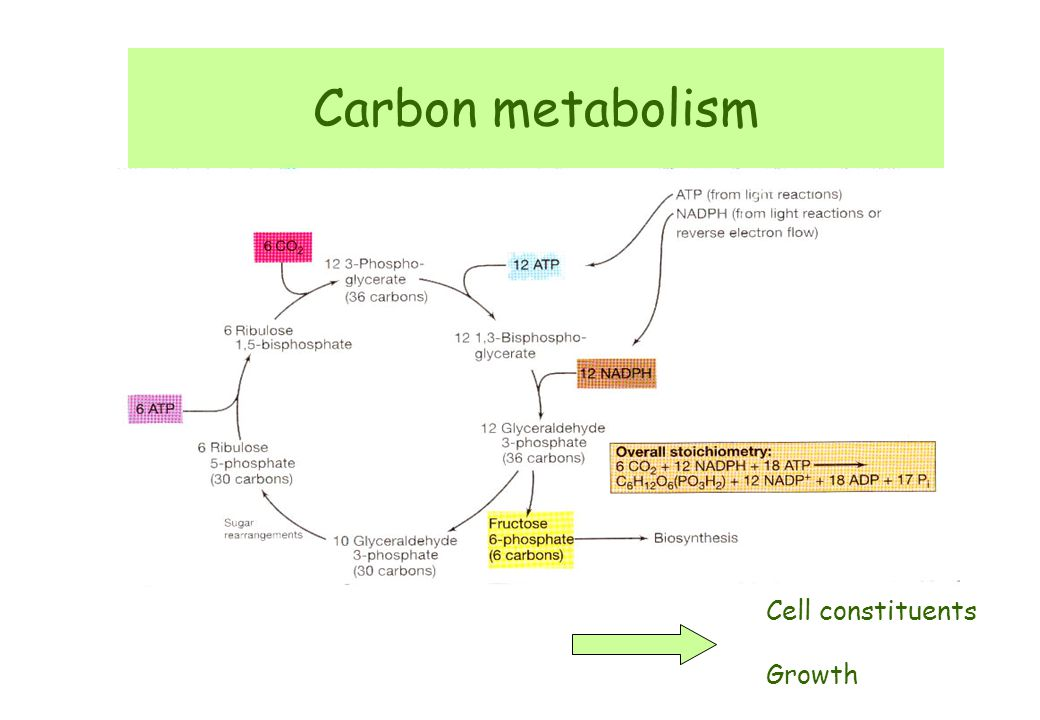 Carbon metabolism Cell constituents Growth