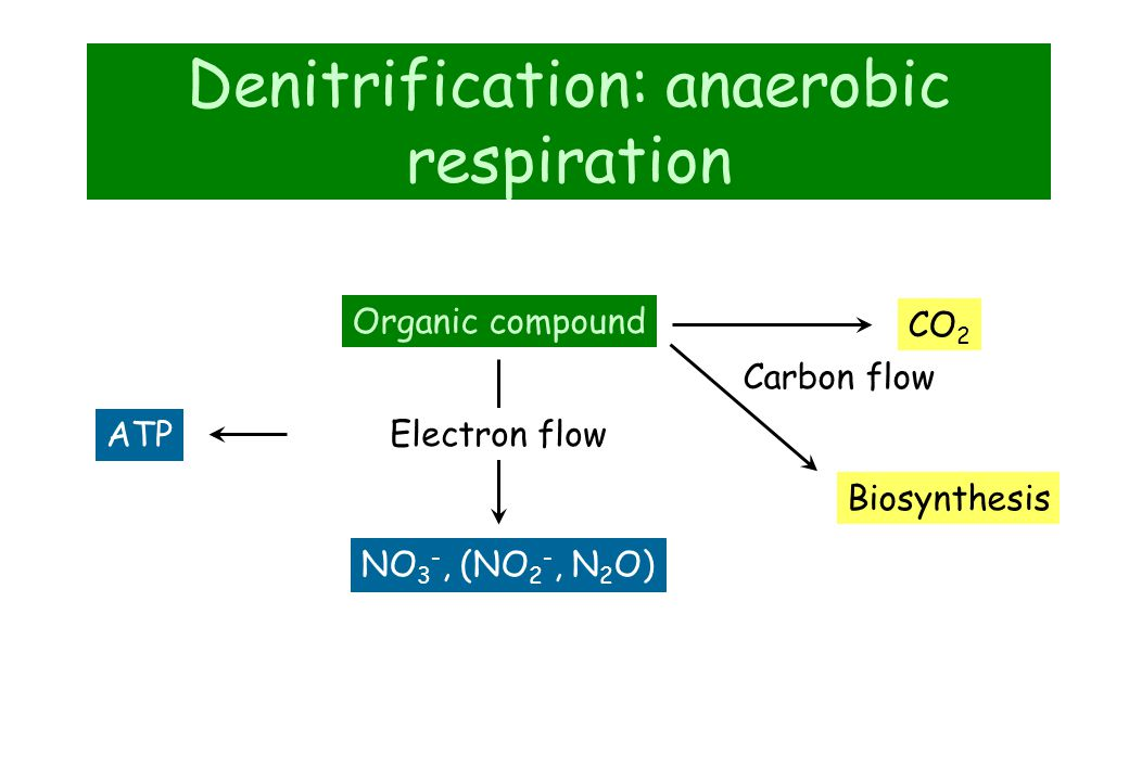 Denitrification: anaerobic respiration