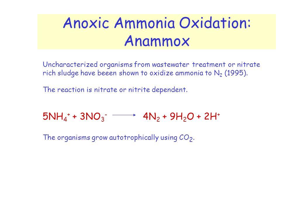 Anoxic Ammonia Oxidation: Anammox