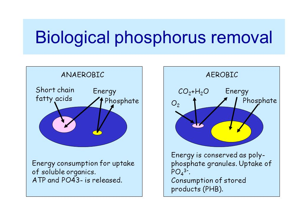 Biological phosphorus removal