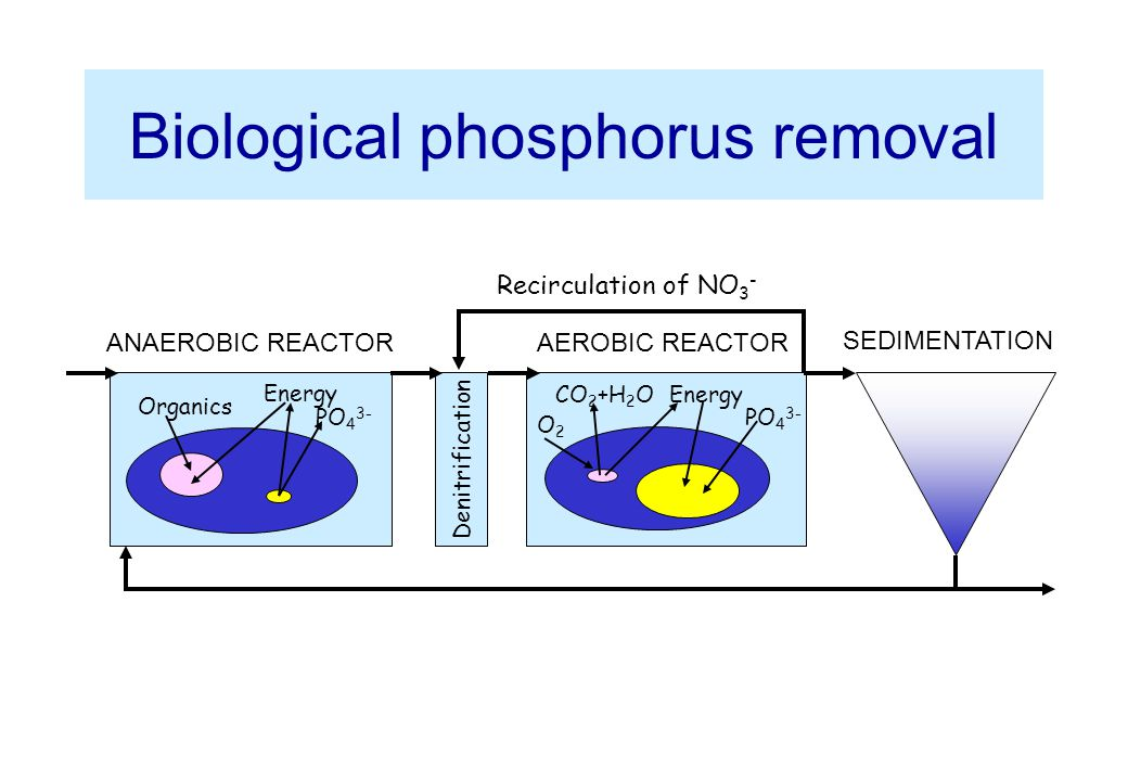 Study on Enhanced Biological Phosphorus Removal ...