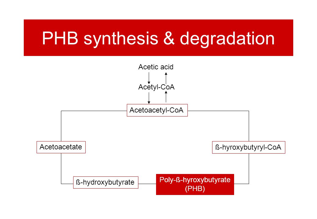 PHB synthesis & degradation