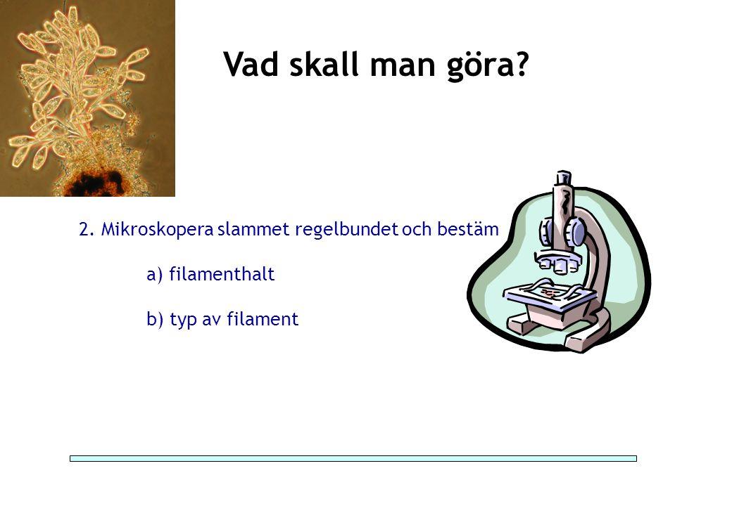 Vad skall man göra 2. Mikroskopera slammet regelbundet och bestäm