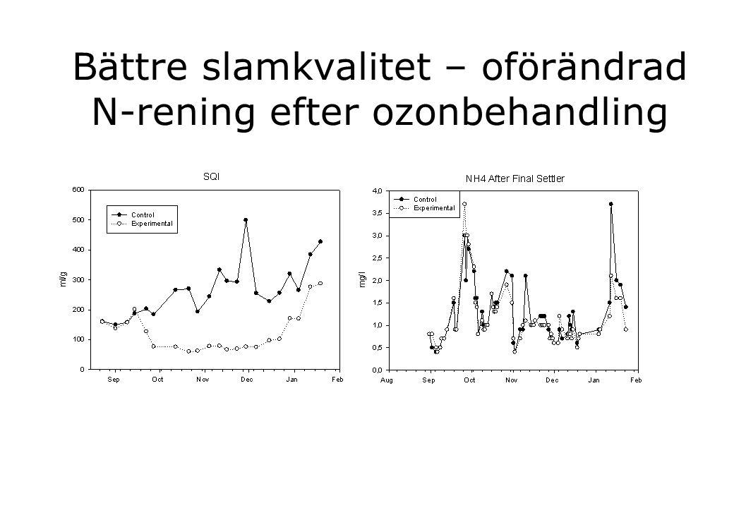 Bättre slamkvalitet – oförändrad N-rening efter ozonbehandling