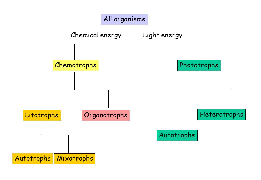 All organisms Chemical energy. Light energy. Chemotrophs. Phototrophs. Litotrophs. Organotrophs.