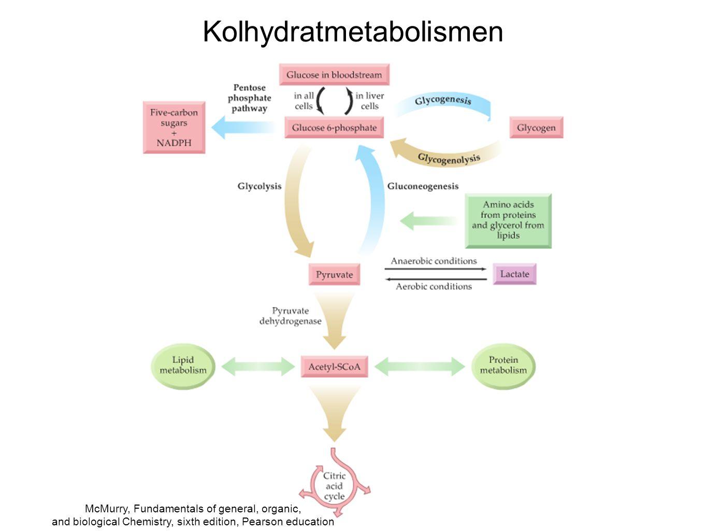 Kolhydratmetabolismen