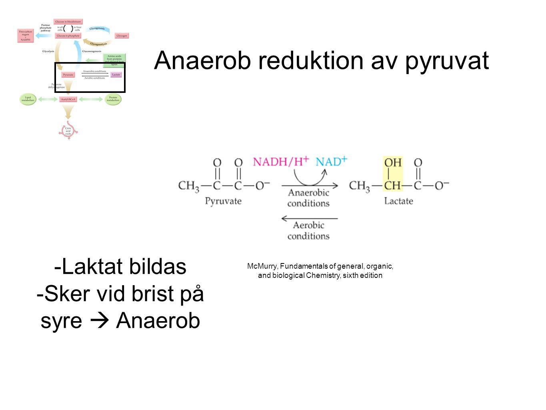 Anaerob reduktion av pyruvat