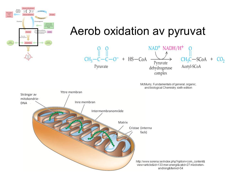 Aerob oxidation av pyruvat