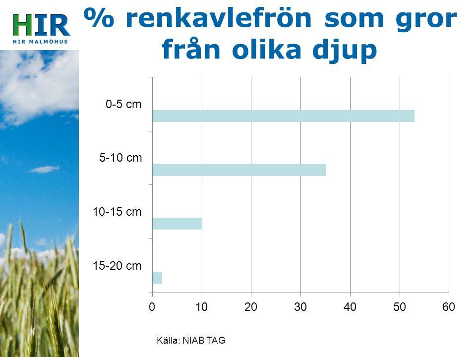 % renkavlefrön som gror från olika djup