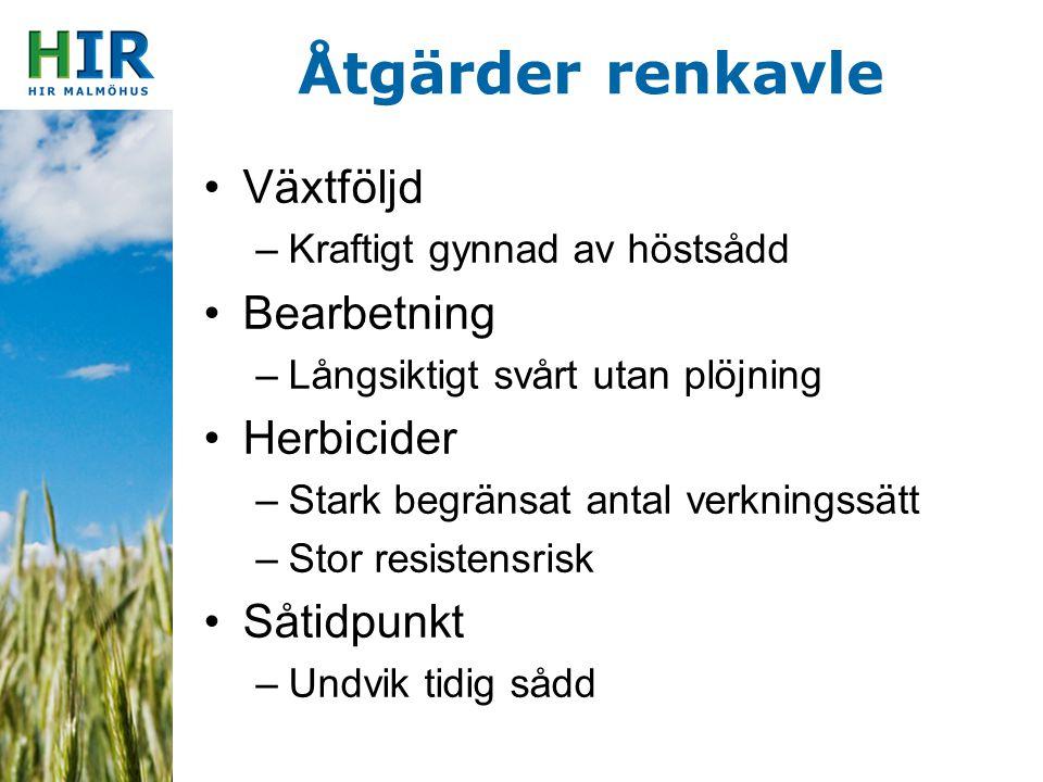 Åtgärder renkavle Växtföljd Bearbetning Herbicider Såtidpunkt