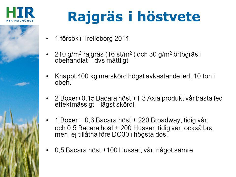Rajgräs i höstvete 1 försök i Trelleborg 2011