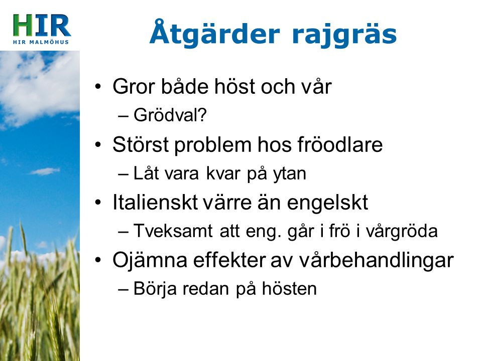 Åtgärder rajgräs Gror både höst och vår Störst problem hos fröodlare