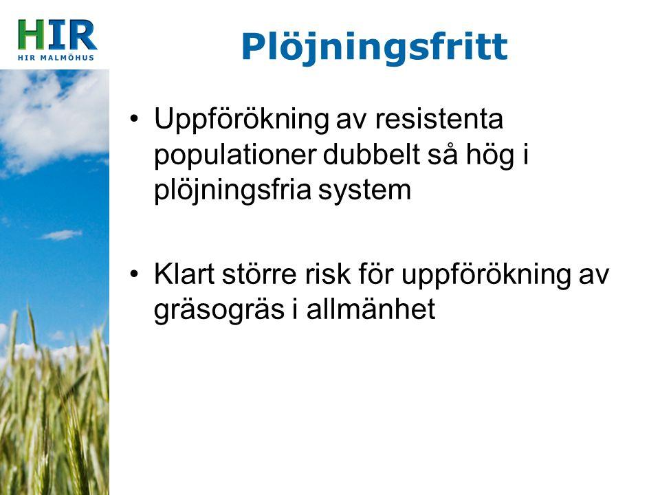 Plöjningsfritt Uppförökning av resistenta populationer dubbelt så hög i plöjningsfria system.