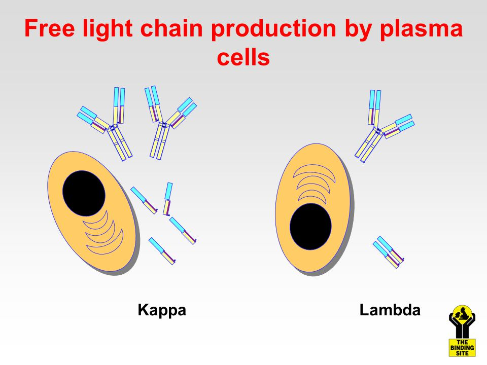 Free light chain production by plasma cells