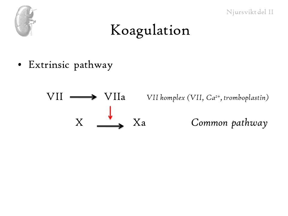 Koagulation Extrinsic pathway